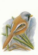BUZIN. LA PANURE à MOUSTACHES - 1985-.. Oiseaux (Buzin)
