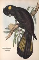CARTE THÈME OISEAUX  D'AUSTRALIE J.GOULD CALYPTORHYNTUS FUNEREUS - Birds