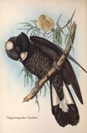 CARTE THÈME OISEAUX  D'AUSTRALIE J.GOULD CALYPTORHYNTUS BANDINIL - Birds