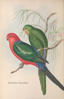 CARTE THÈME OISEAUX  D'AUSTRALIE J.GOULD APROMICTUS SCAPULATUS - Birds