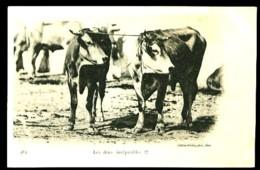 483 : Les Deux Inséparables - (Gros Plan 2 Vaches) - CP Précurseur, Vers 1900. - Autres