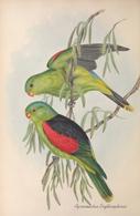 CARTE THÈME OISEAUX  D'AUSTRALIE J.GOULD APROSMICTUS ERYTHOPETERUS - Birds