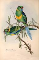 CARTE THÈME OISEAUX  D'AUSTRALIE J.GOULD PLATYCERCUS BANARDI - Birds