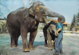 ELEPHANT, ELEPHANTEAU Et Soigneur - Carte à Système, En Relief - Éléphants