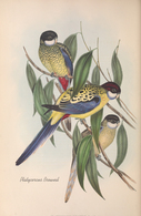 CARTE THÈME OISEAUX  D'AUSTRALIE J.GOULD PLATYCERCUS BROWNIL - Birds