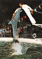 Rust / Baden - Delphin-Show Mit Trainer - DAUPHIN - Delfini