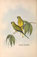 CARTE THÈME OISEAUX  D'AUSTRALIE J.GOULD EUPHEMA PETROPHILA - Birds