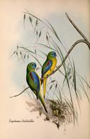 CARTE THÈME OISEAUX  D'AUSTRALIE J.GOULD EUPHEMA PULCHELLLA - Birds