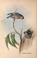 CARTE THÈME OISEAUX  D'AUSTRALIE J.GOULD EUPHEMA BOURKIL - Birds