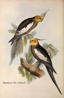 CARTE THÈME OISEAUX  D'AUSTRALIE J.GOULD NYMPHICUS NOW HOLLANDI - Birds