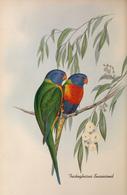 CARTE THÈME OISEAUX  D'AUSTRALIE J.GOULD TRICHOGLOSSUS SWAINSONIL - Birds