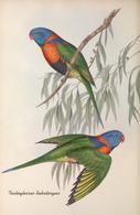 CARTE THÈME OISEAUX  D'AUSTRALIE J.GOULD TRICHOGLOSSUS RUBRITORGUIS - Birds