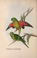 CARTE THÈME OISEAUX  D'AUSTRALIE J.GOULD TRICHOGLOSSUS CHLOROLEPIDOTUS - Birds