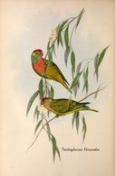 CARTE THÈME OISEAUX  D'AUSTRALIE J.GOULD TRICHOGLOSSUS VERSICOLOR - Birds