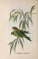 CARTE THÈME OISEAUX  D'AUSTRALIE J.GOULD TRICHOGLOSSUS CONCINNUS - Birds