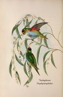 CARTE THÈME OISEAUX  D'AUSTRALIE J.GOULD TRICHOGLOSSUS PORPHYROCEPHALUS - Birds