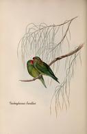 CARTE THÈME OISEAUX  D'AUSTRALIE J.GOULD TRICHOGLOSSUS PUSILLUS - Birds