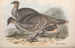 CARTE THÈME OISEAUX  D'AUSTRALIE J.GOULD LEIPOA OCELLATA - Birds