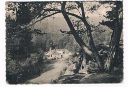 L-2163  CONSDORF : Moulin Vu Du Burgkapp - Echternach