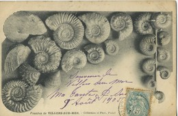 CPA 14 Villers Sur Mer Fossilles 1905 Peu Courante - Villers Sur Mer