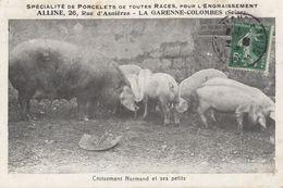92 - La GARENNE COLOMBES - ALLINE - Producteur De Porcelet Pour L'Engraissement - CP Adressée à M. Dhuicque Etrépilly 77 - La Garenne Colombes
