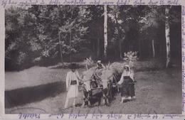 CARTE PHOTO ALLEMANDE - GUERRE 14-18 - ROUMANIE - ATTELAGE BOEUFS ROUMAINS - 2 PHOTOS - Guerre 1914-18