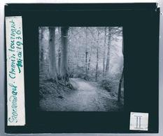 Oude Glasplaat (8,5 X 10cm). GROENENDAEL.  Chemin Tournant 1936 - Glasdias