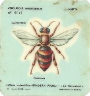 ZOOLOGIA  INVERTEBRATI   INSETTI   CALABRONE - Scienze & Tecnica