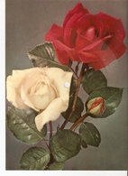 Old Musical 45rpm Record Postcard Schallbildkarte Roses Birthday Geburtstag Alles Gute Alfred Jacksch-Hans Gorling - Unclassified
