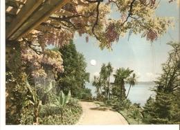 Old Musical 45rpm Record Postcard Bananaboat Song Schallbildkarte Insel Mainau In Bodensee Calypso Luis Warner Orchestro - Vinyl Records