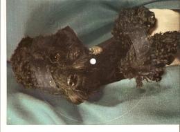 Old Musical 45rpm Record Postcard Einmal In Tampico Schallbildkarte Dog Poodle Melodie Herzog Film Die Grosse Chance Oli - Vinyl Records