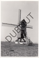 HUISE ZINGEM - Originele Foto Jaren '70 A.Carre - Huisekoutermolen Molenstraat (Q59) - Zingem