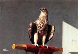 Rapaces - Parc Ornithologique De Villars-les-Dombes (Ain) - AIGLE Impérial - Uccelli