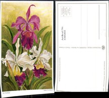 338602,Künstler Ak Sid. Matthaei Bunte Orchideen Blumen - Botanik