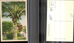205445,Florida Tree Loades With Cocoanuts Palme Kokosnuss - Küchenrezepte