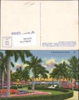 162549,Florida Beautiful Park Palmen - Vereinigte Staaten