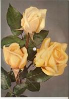 Old Musical 45rpm Record Postcard Schallbildkarte Roses Walzerlied Feltz Gietz Dich Werd' Ich Nie Vergessen - Vinyl Records