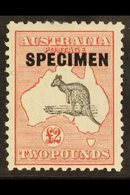 "1929  £2 Black And Rose, Wmk Mult Crowns And A, Kangaroo, Overprinted ""Specimen"", SG 114, Very Fine Mint. For More Image - Australie"