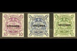 """SPECIMENS  1948-56 10s, £1 & £2 High Values, Overprinted """"SPECIMEN,"""" SG 224bs/ds, Never Hinged Mint (3 Stamps). For More - Australie"""