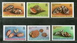 Turks & Caicos Islands 1980 Sea Shells Cowrie Marine Life  Sc 434-39 MNH # 2328 - Coneshells