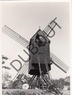 MALDEREN/OPWIJK  - Originele Foto Jaren '70 A.Carre - HeideMolen  (Q90) - Opwijk
