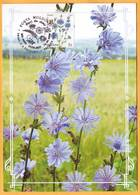 2016  Moldova Moldavie Moldau.  Wildflowers Of Moldova. Maximum Card Common Chicory (lat. Cichórium íntybus) - Pflanzen Und Botanik