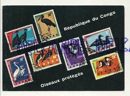 Carte Postale: Sélection De Timbres-Poste De La République Du Congo Oiseaux Protégés. Création Editions Rodan - Timbres (représentations)