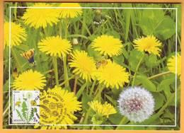 2016  Moldova Moldavie Moldau.  Wildflowers Of Moldova. Maximum Card  Common Dandelion (lat. Taráxacum Officinále) - Végétaux