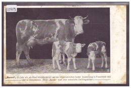 """"""" BARON """" 3 1/4 JAHRE ALT, ALS RIND HOCHPRÄMIERT AUF DER SCHWEIZ. LANDW. AUSSTELLUNG IN FRAUENFELD 1903 - TB - Suisse"""