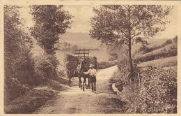Auby Sur Semois, Route Vers La Semois (pk57828) - Bertrix