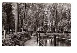Belgique Wonck Vallée Du Geer Promenade Paisible Sous Les Peupliers CPSM PF Cachet 1960 - Bassenge