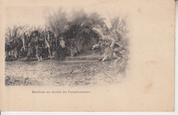 MAURICE - Bambous Au Jardin Des Pamplemousses   PRIX FIXE - Mauritius
