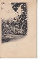 MAURICE - Le Jardin Des Pamplemousses - Tombeau De Paul Et Virginie  PRIX FIXE - Mauritius