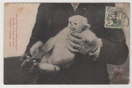 8720 Vietnam Cochinchine Tonkin Nha-Nam Monkey Stamping Indo-Chine - Vietnam